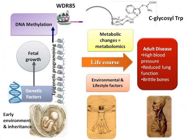 Metabolics-744x559